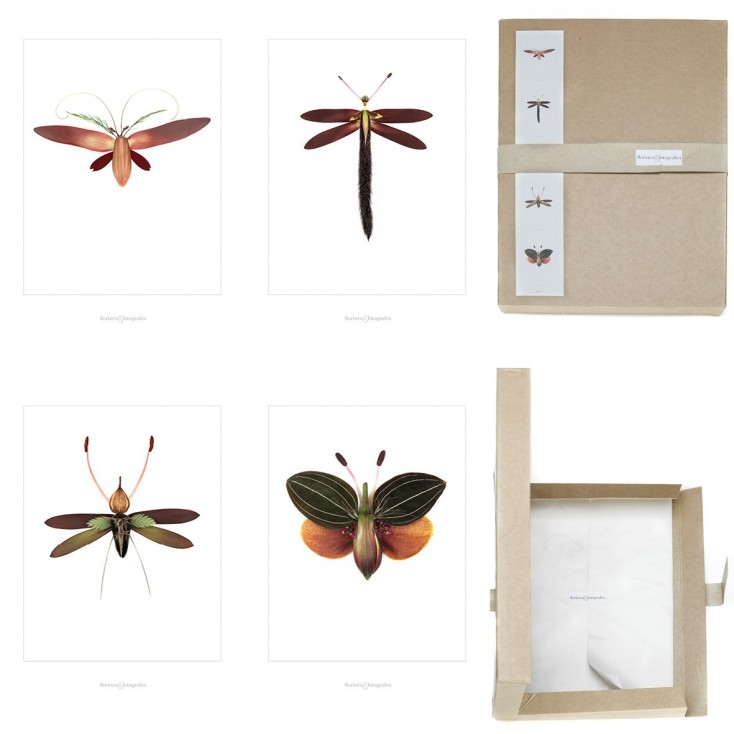 Winged Flora Picture Box - Set No 1