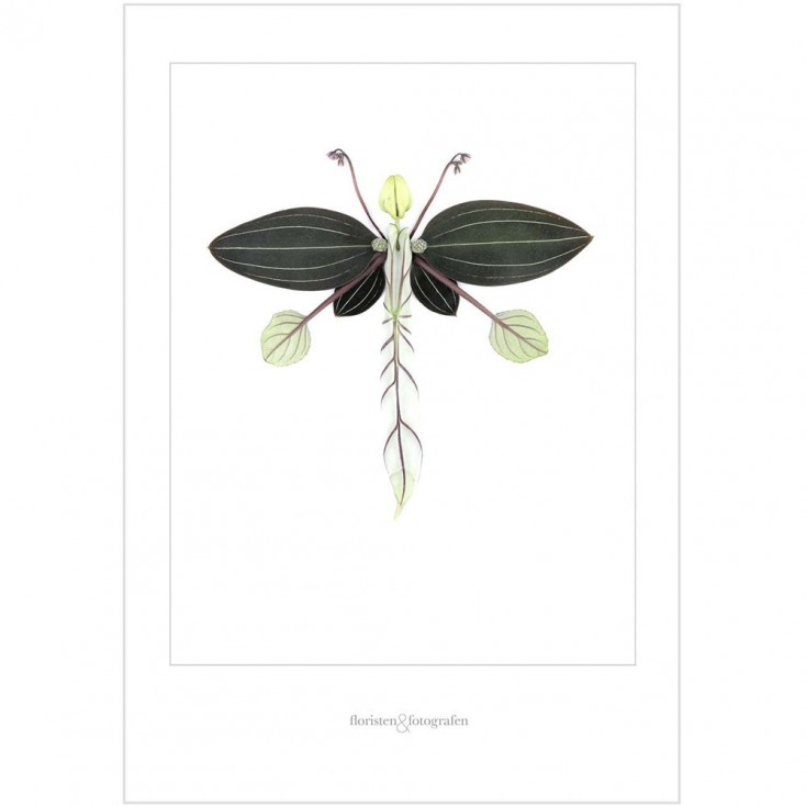 Winged Flora Print No 11