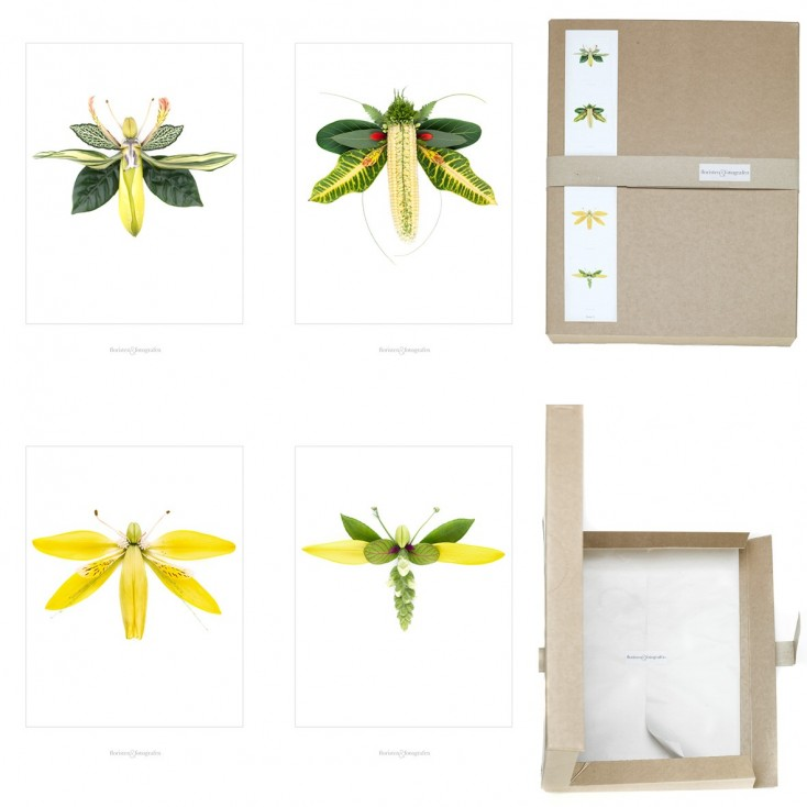 Winged Flora Picture Box - Set No 3