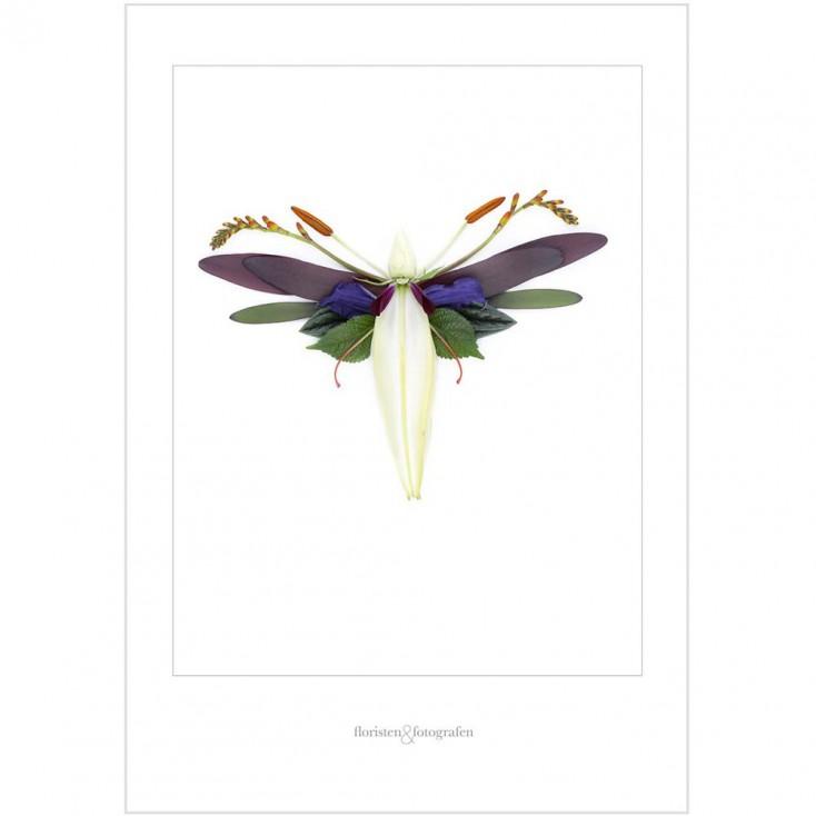 Winged Flora Print No 12