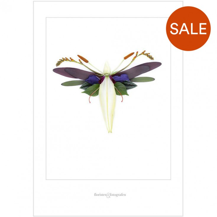 Winged Flora Print No 12