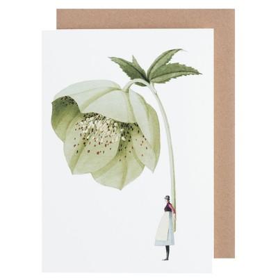 Laura Stoddart Greeting Card - Hellebore