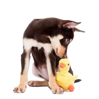 Laboni Emma Ente Dog Toy