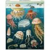 Cavallini & Co Jellyfish 1000 Piece Jigsaw