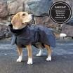 Paikka Visibility Dog Raincoat - Black