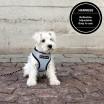 Paikka Visibility Dog Harness