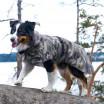 Paikka Visibility Reflective Winter Dog Coat - Camo