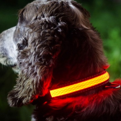 Pink LED Light Up Dog Collar