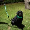 Green LED Light Up Dog Collar & Lead