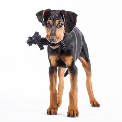 Laboni Kater Casanova Dog Toy