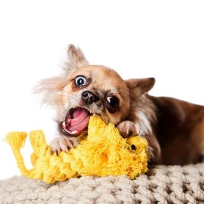 Laboni Leo Lion Dog Toy