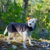 Paikka Recovery Winter Dog Shirt
