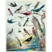 Cavallini & Co Audubon Birds 1000 Piece Jigsaw