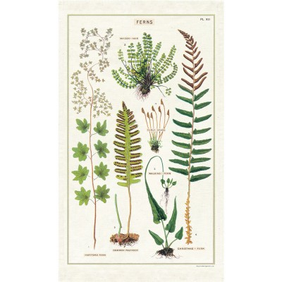 Cavallini & Co Tea Towel - Ferns