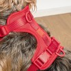 Wild One Dog Harness - Coral Red