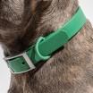 Wild One Dog Collar - Spruce