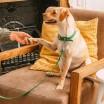 Wild One Dog Collar & Lead - Spruce