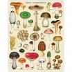 Cavallini & Co Mushrooms 1000 Piece Jigsaw