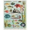 Cavallini & Co Aquarium 1000 Piece Jigsaw